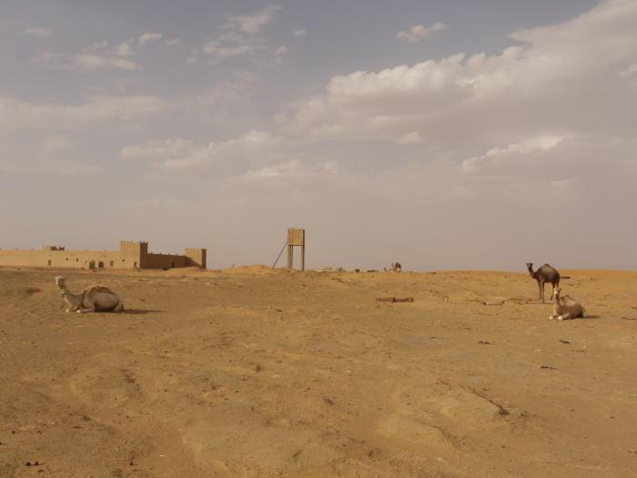 モロッコ3 砂漠でラクダ_a0042928_141378.jpg