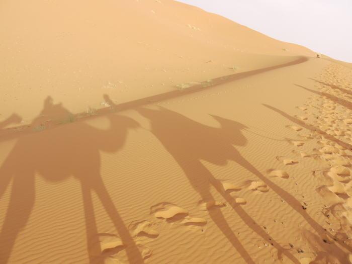 モロッコ3 砂漠でラクダ_a0042928_143990.jpg