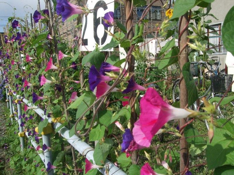 1068) 庭の風景 _f0126829_8285468.jpg