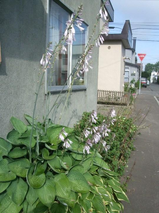 1068) 庭の風景 _f0126829_8333496.jpg