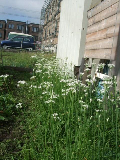 1068) 庭の風景 _f0126829_8395194.jpg
