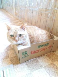 糸魚川/夏季休暇_b0071348_1348611.jpg