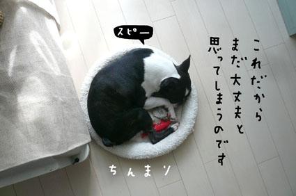 f0170072_1652252.jpg