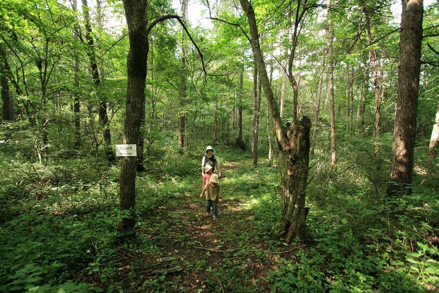 美笹自然観察園のオニヤンマ_a0107574_635561.jpg