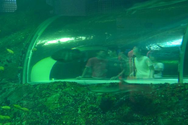 at the aquarium _e0174281_22211758.jpg