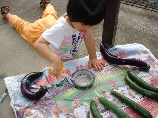 お野菜出荷のお手伝いをするマコちゃん!_e0166301_15133125.jpg