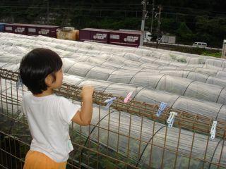お野菜出荷のお手伝いをするマコちゃん!_e0166301_15201517.jpg