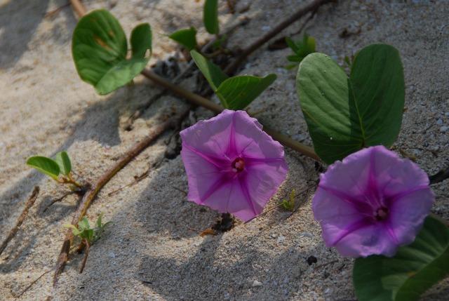 Busena Beach_d0065116_10182864.jpg