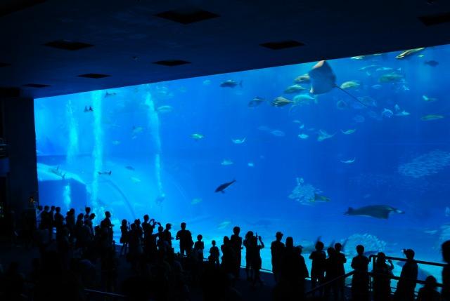 美ら海水族館_d0065116_20234180.jpg