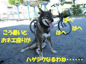 f0143123_914362.jpg