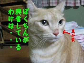 b0151748_1845265.jpg