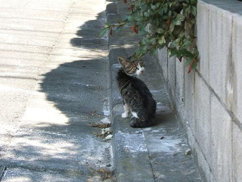 子猫に遭遇_e0089232_2324767.jpg