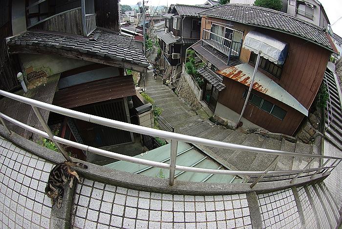 ネコと坂道_c0152379_15243423.jpg