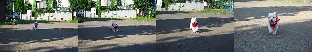 f0169884_11113290.jpg