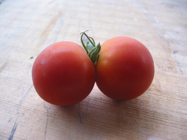「双子のトマト」_a0120513_1483322.jpg
