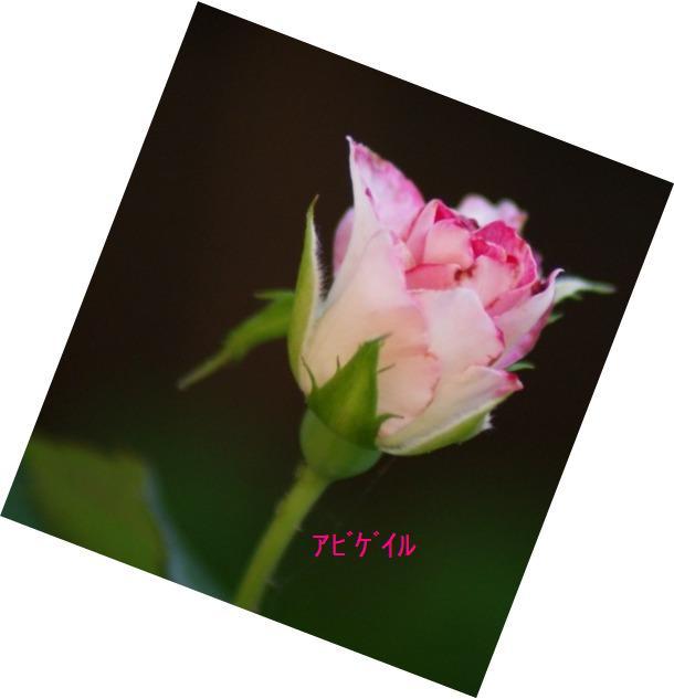 f0170524_11505779.jpg