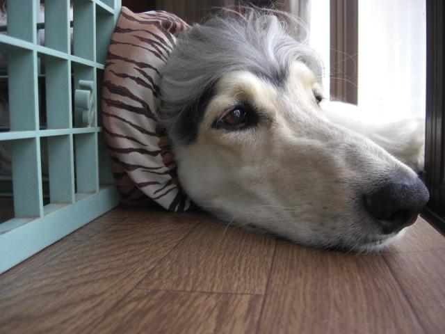「犬のうた ~ありがとう~」_c0126766_1316691.jpg