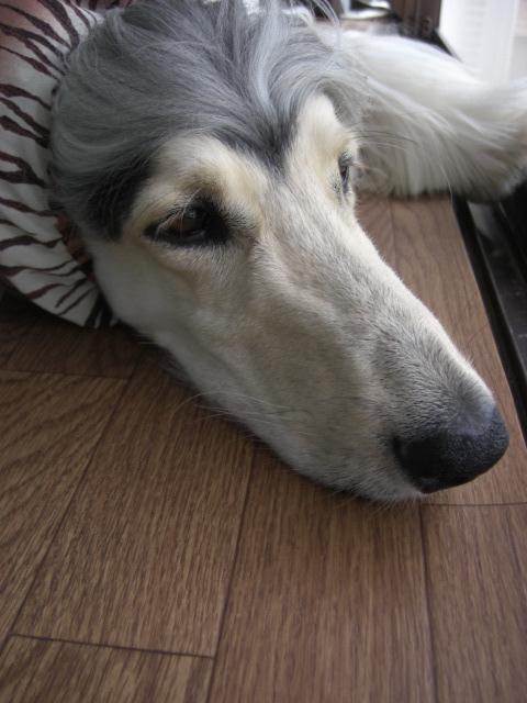 「犬のうた ~ありがとう~」_c0126766_1317661.jpg