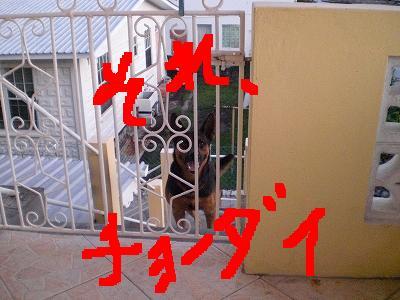 b0138450_11294611.jpg