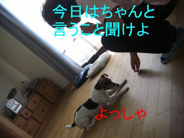 f0053952_17284990.jpg