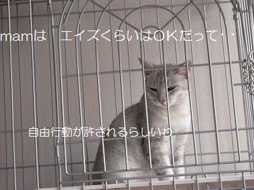 c0139488_15334551.jpg