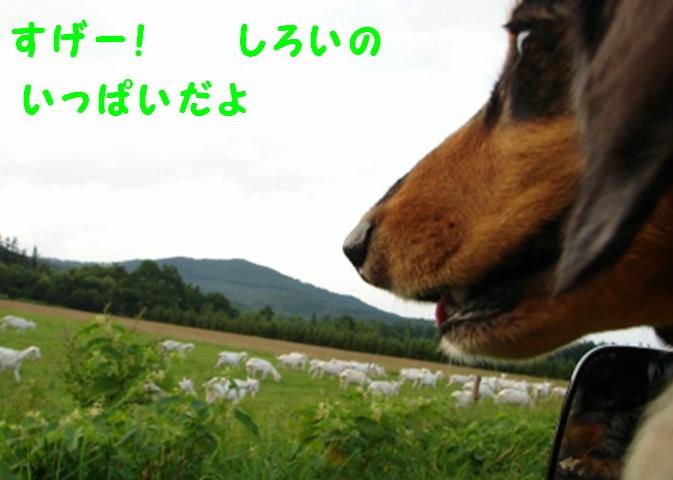 f0195891_20121450.jpg