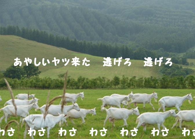 f0195891_2013574.jpg