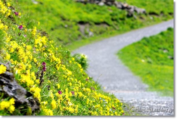 スイスアルプスの山上湖 バッハアルプゼー_f0179404_21415136.jpg