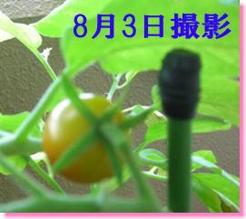 f0118508_1144069.jpg