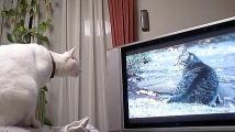 のら暦*ねこ休みネコ遊ビ*DVDに見入る猫_f0006713_212332.jpg