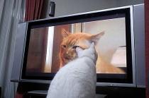 のら暦*ねこ休みネコ遊ビ*DVDに見入る猫_f0006713_649103.jpg
