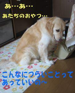 b0008217_2045232.jpg