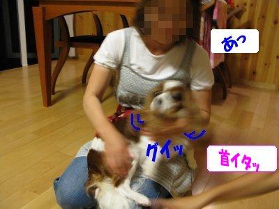 b0185323_16213137.jpg