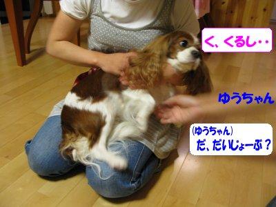 b0185323_16242992.jpg