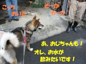 f0143123_20205932.jpg