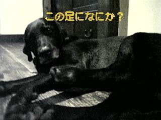 f0148927_7441042.jpg