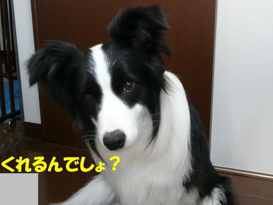 c0147241_22334627.jpg