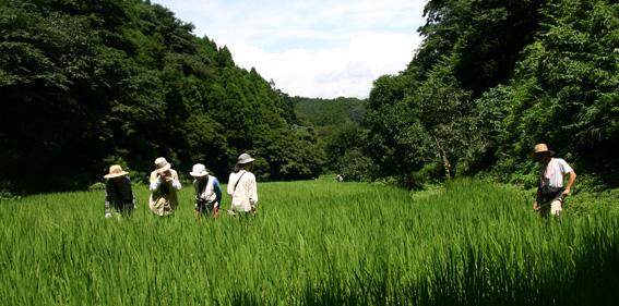 盛夏の棚田_c0042548_1210952.jpg