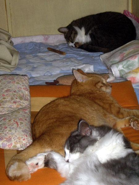 寝子 ヤマセの日はみんな寝てる♪_a0136293_15481639.jpg