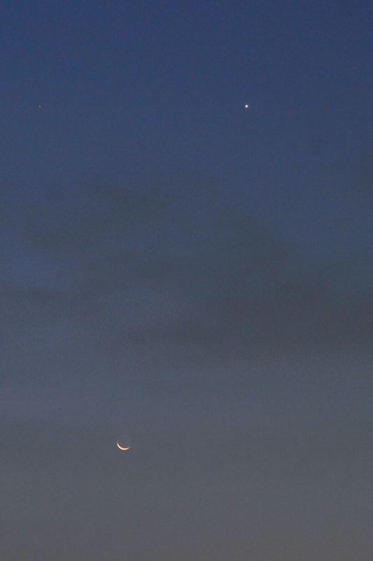 コチドリの幼鳥/眉月と金星_b0024798_4593215.jpg