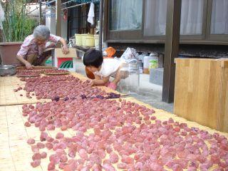 梅干しと、cocoaさんの手作りパンとマコちゃん_e0166301_20513265.jpg