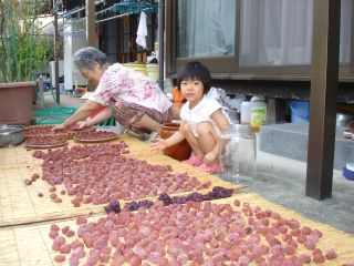 梅干しと、cocoaさんの手作りパンとマコちゃん_e0166301_205457100.jpg
