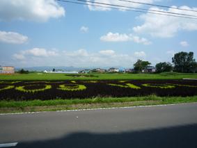 田んぼ見に行きましたよ。_e0148212_16285325.jpg