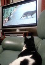 アンディ・ウォーホル作マイケル・ジャクソン肖像画数百万ドルに/のら暦DVDに見入る猫の続き_f0006713_5132557.jpg