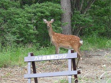 八ケ岳高原ロッジ訪問_f0019247_072762.jpg