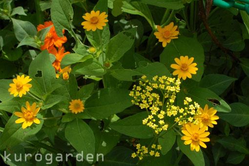 モネの庭_e0119151_10535748.jpg