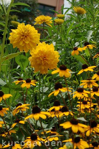 モネの庭_e0119151_10541352.jpg