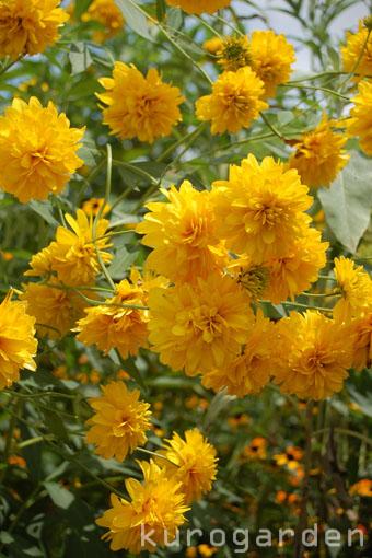 モネの庭_e0119151_1054513.jpg