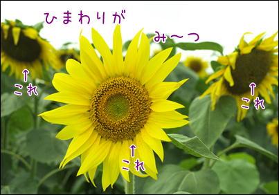 d0139352_08717.jpg