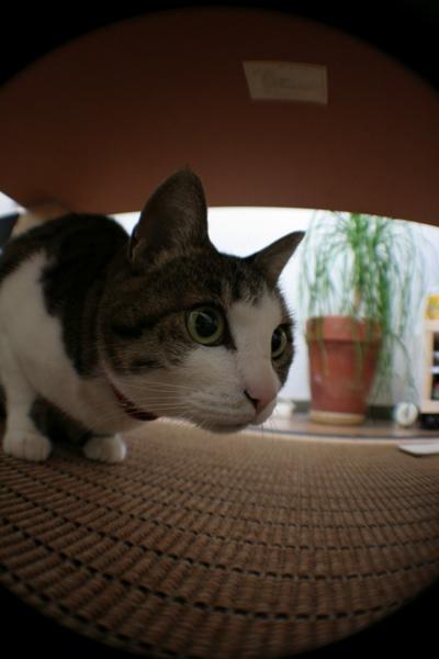 猫部屋_f0198764_040886.jpg